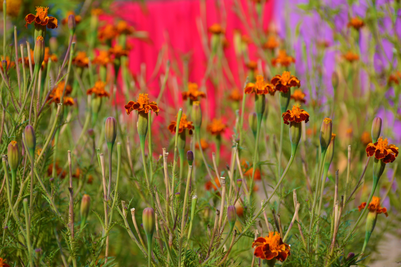 Free stock photo of background, background image, Beautiful Background, beautiful flower