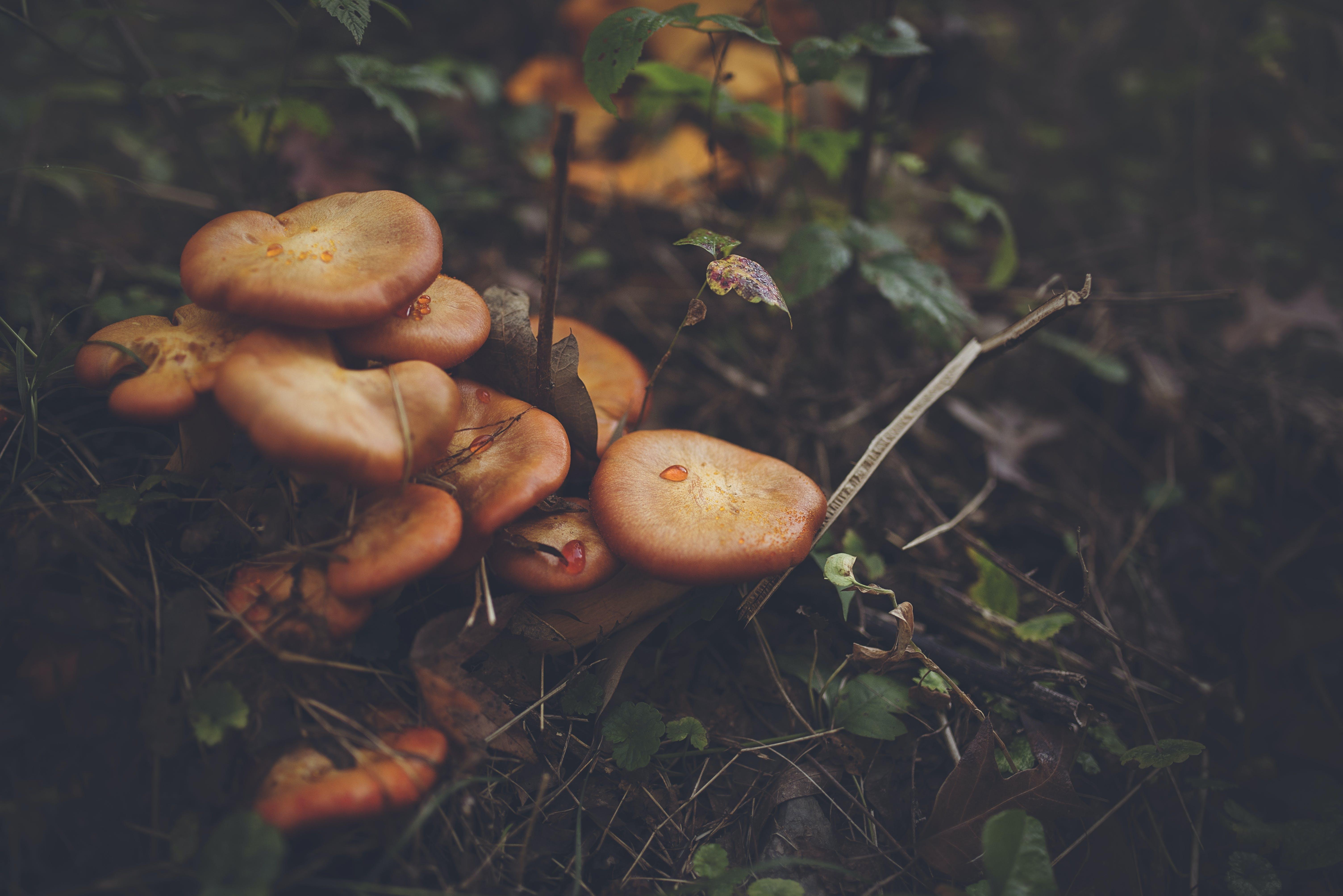 Orange Mushroom on Black Soil