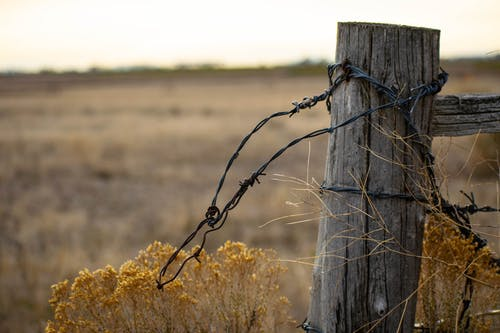 Free stock photo of barbed wire, fence, field, sunrise