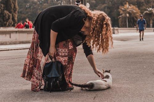 Foto d'estoc gratuïta de amant de les mascotes, carrer, carretera, commovedor
