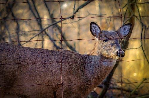 #doğa, doğada güzellik, doğal güzellik, geyik içeren Ücretsiz stok fotoğraf