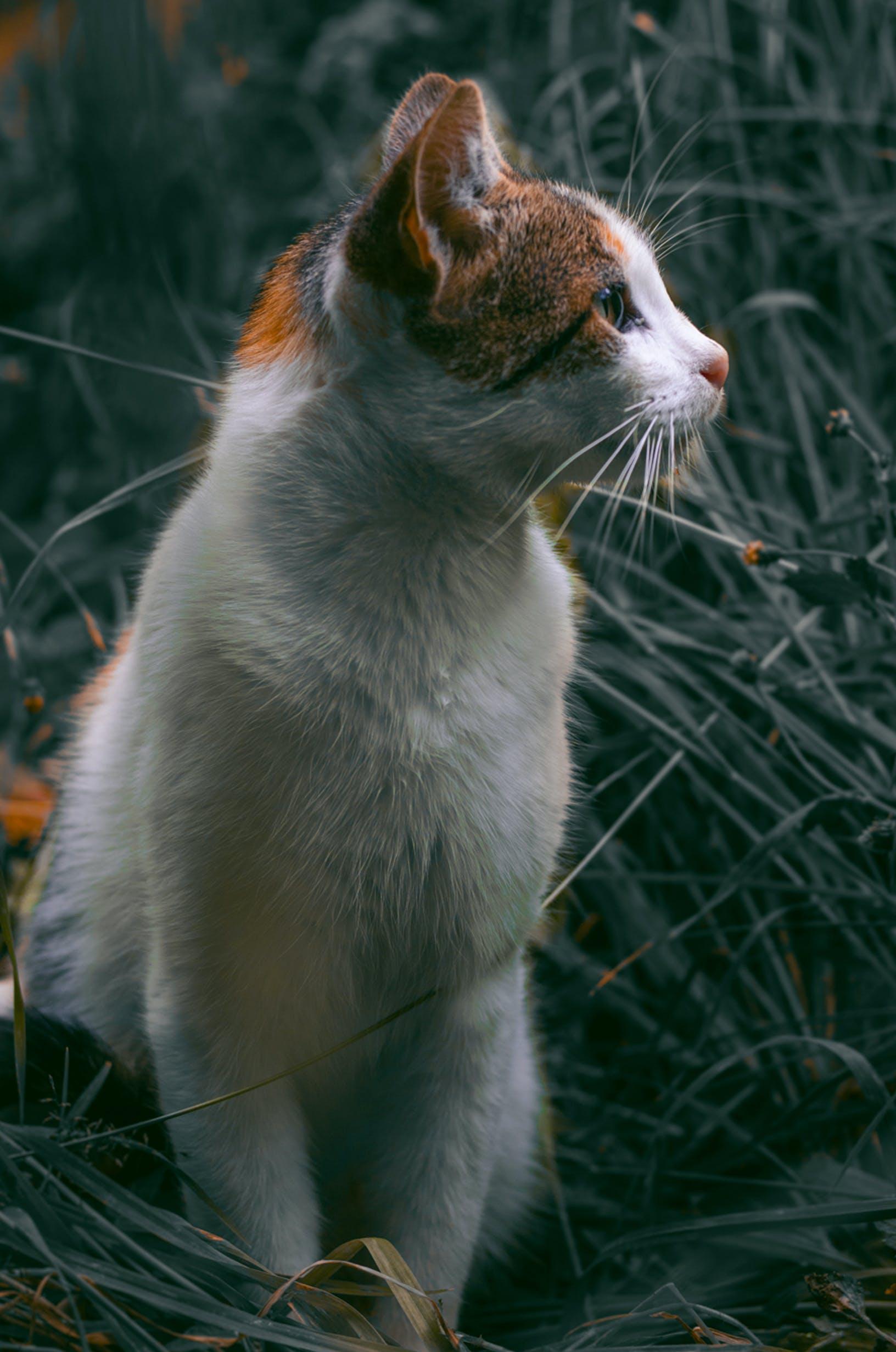 Cat Looking Towards Right