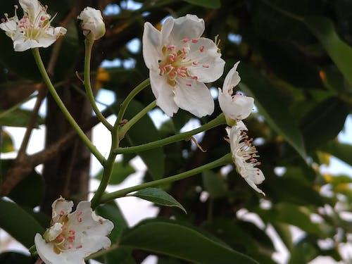 Ingyenes stockfotó fa, hajfonat, virágok, zöld témában