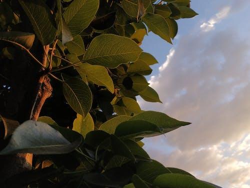 Ingyenes stockfotó hajfonat, kék ég, zöld témában