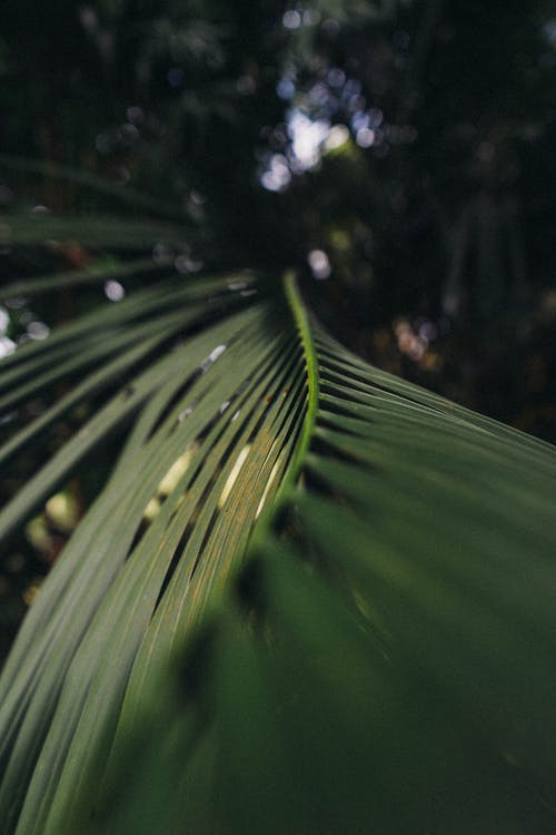Selective Focus Photography of Green Coconut Leaf