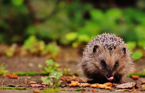 Immagine gratuita di ambiente, animale, carino, mammifero