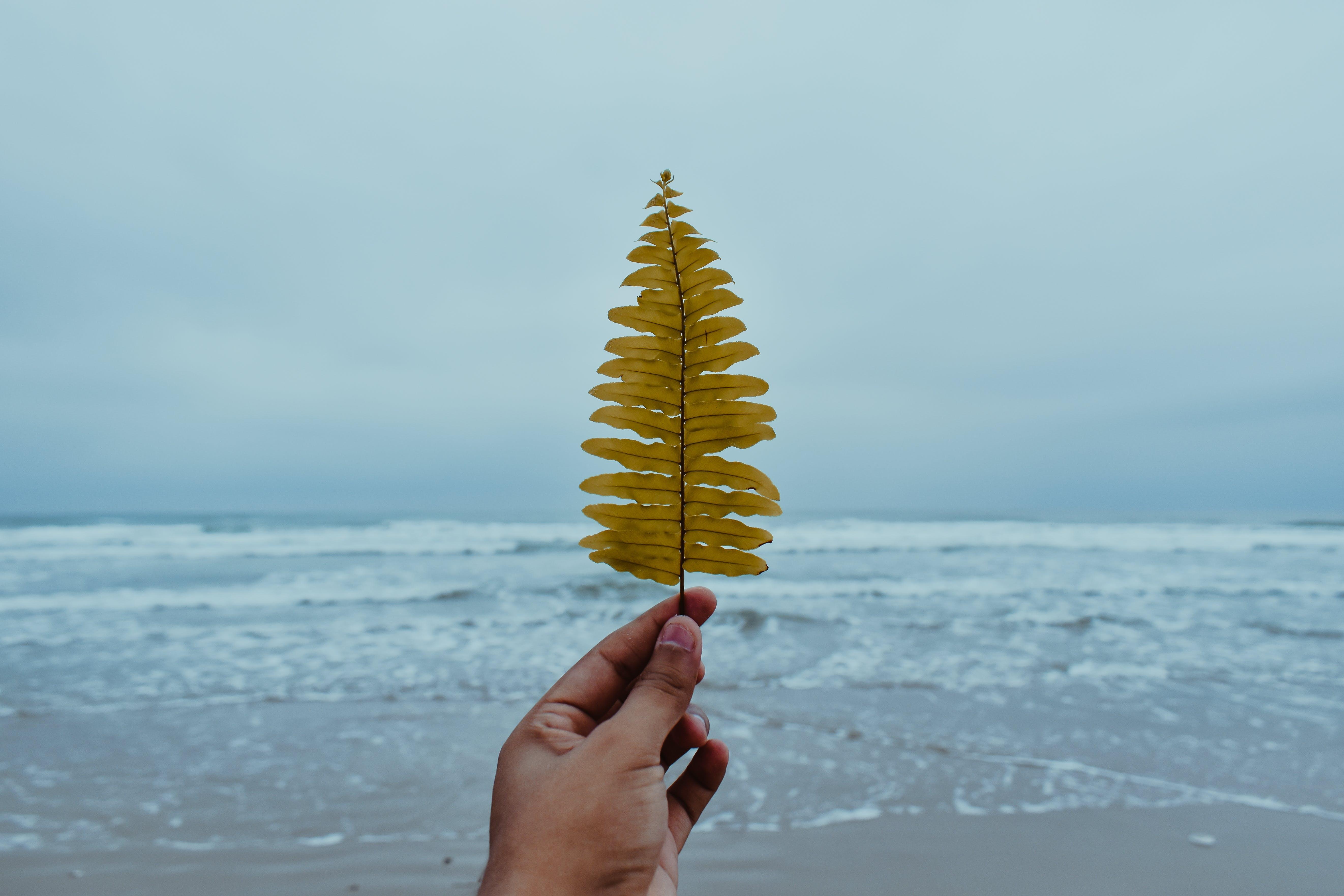 blå hav, blad, bølger