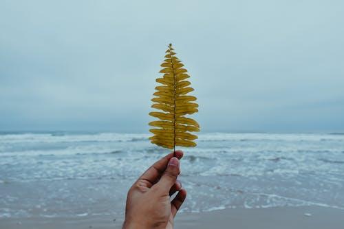Foto profissional grátis de areia, beira-mar, de frente para o mar, de frente para praia