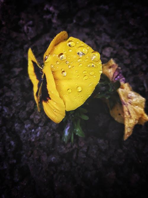 Gratis arkivbilde med #flower #contest, #mobilechallenge, #natur, #outdoorchallenge