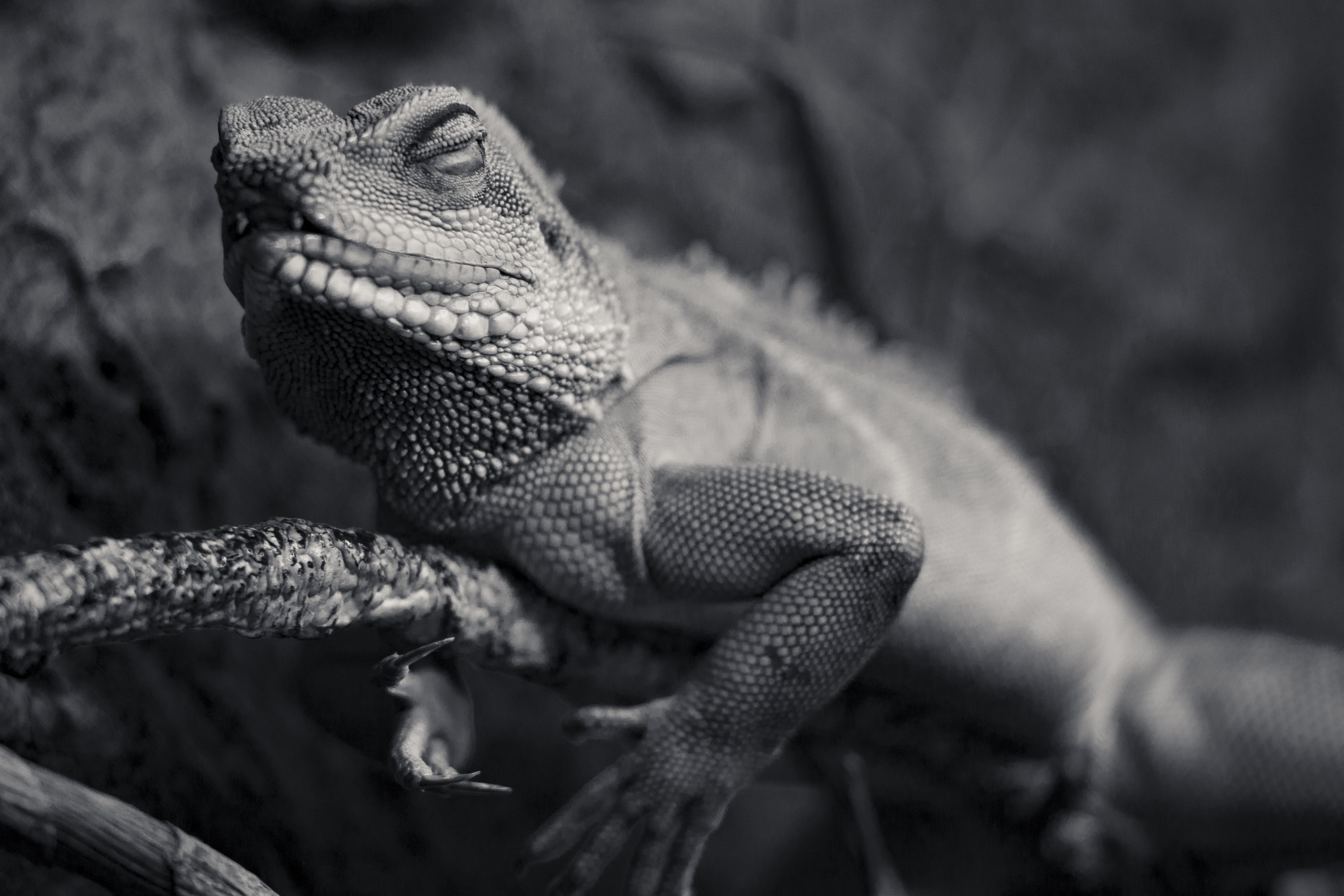나무, 도마뱀, 동물, 동물 사진의 무료 스톡 사진