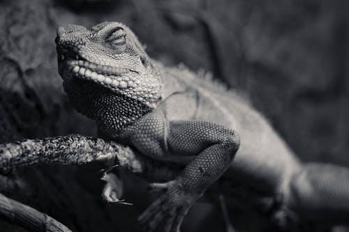 Δωρεάν στοκ φωτογραφιών με άγρια φύση, άγριος, γκρο πλαν, εξωτικός