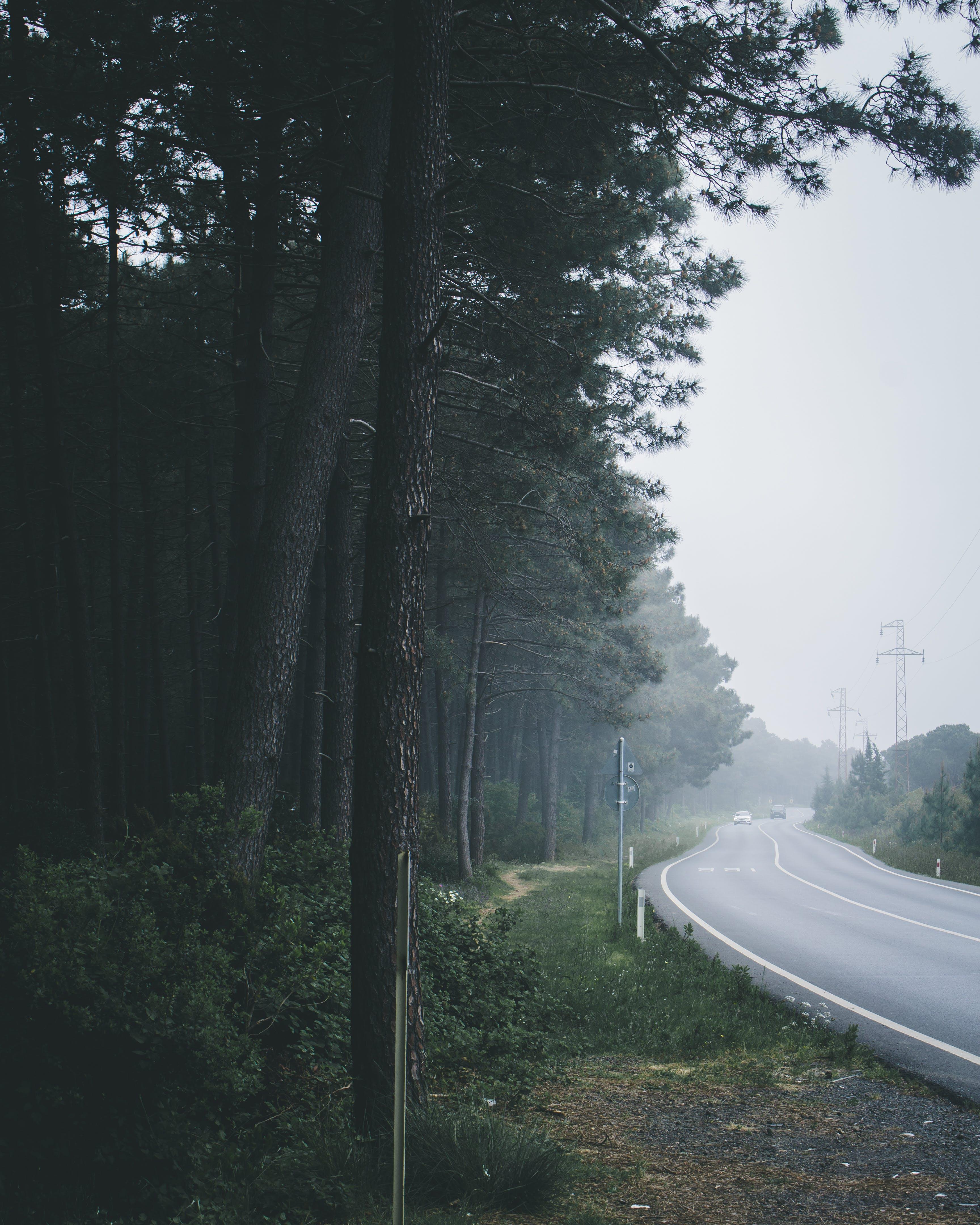 Gratis lagerfoto af asfalt, dagslys, dis, landskab