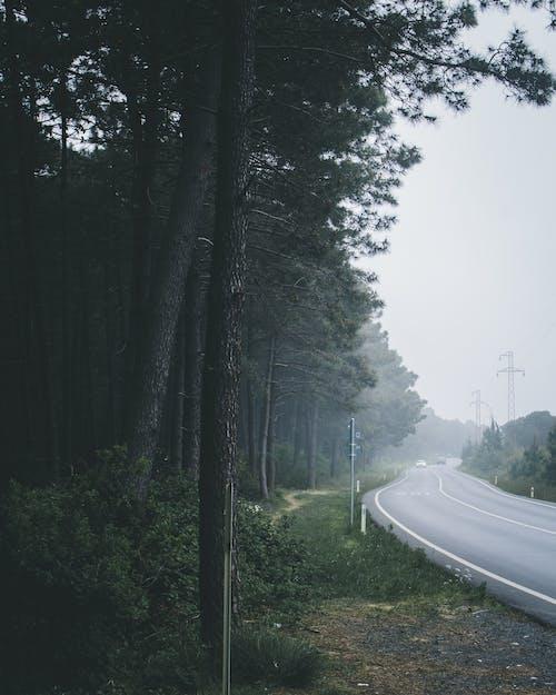 Бесплатное стоковое фото с асфальт, деревья, дневной свет, дождь