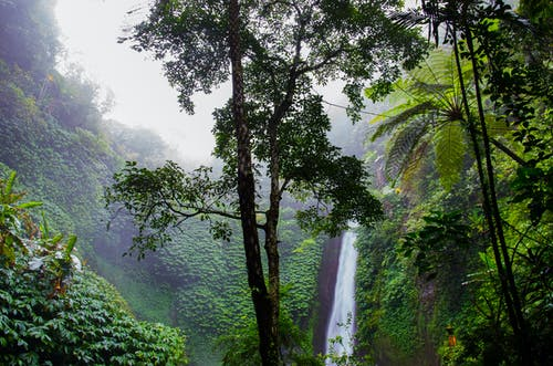 Green Leafed Trees Near Waterfalls