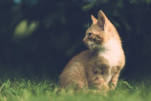 Selective Focus Photography of Sitting Orange Cat on Grass