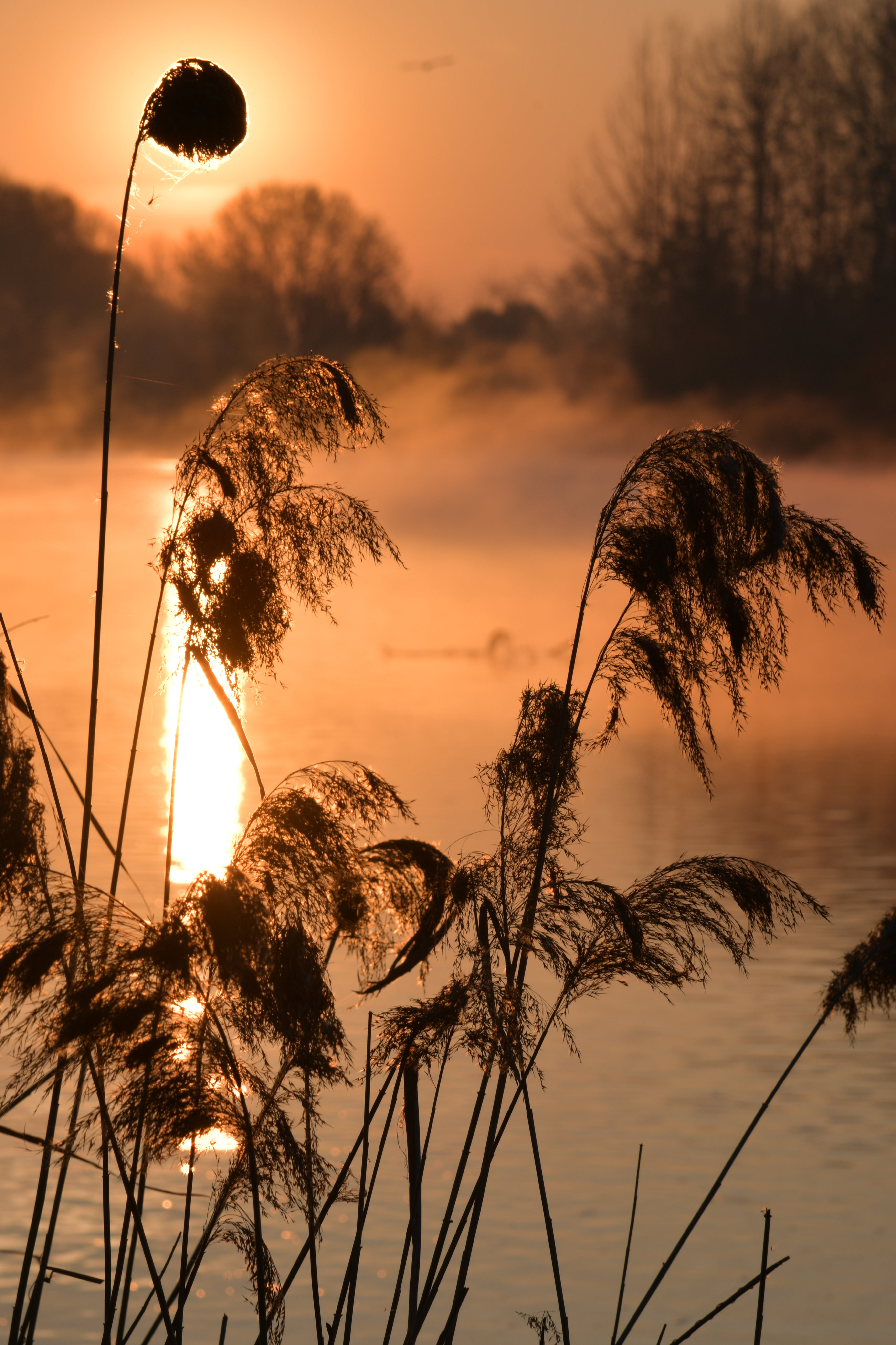 Foto d'estoc gratuïta de alba, plantes, silueta