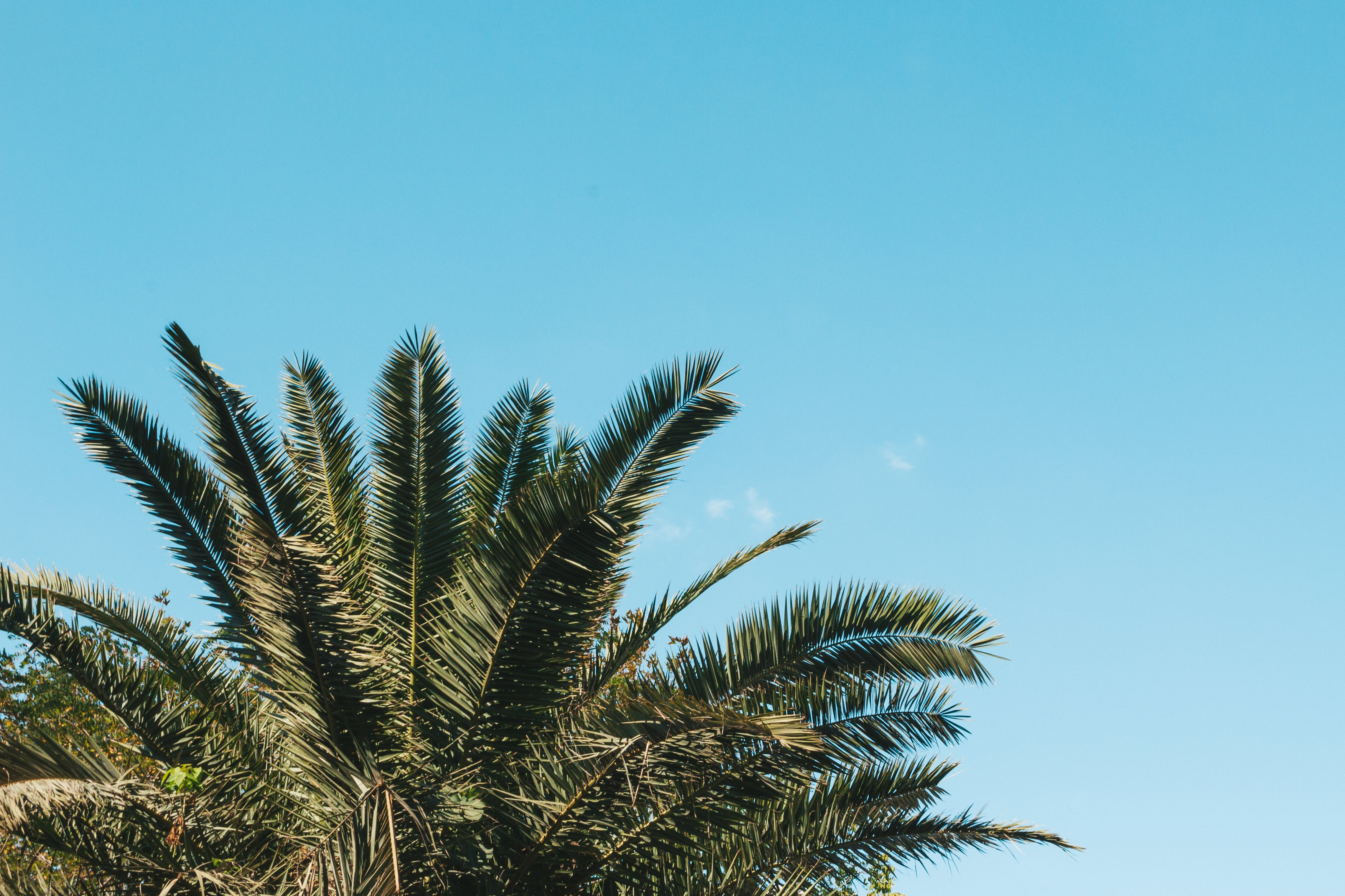 Photo of Palm Leaves During Daytime