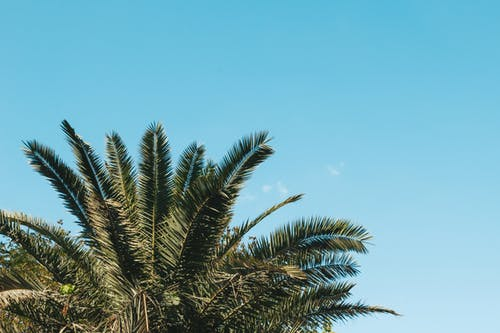 Darmowe zdjęcie z galerii z błękitne niebo, czyste niebo, drzewo, drzewo kokosowe