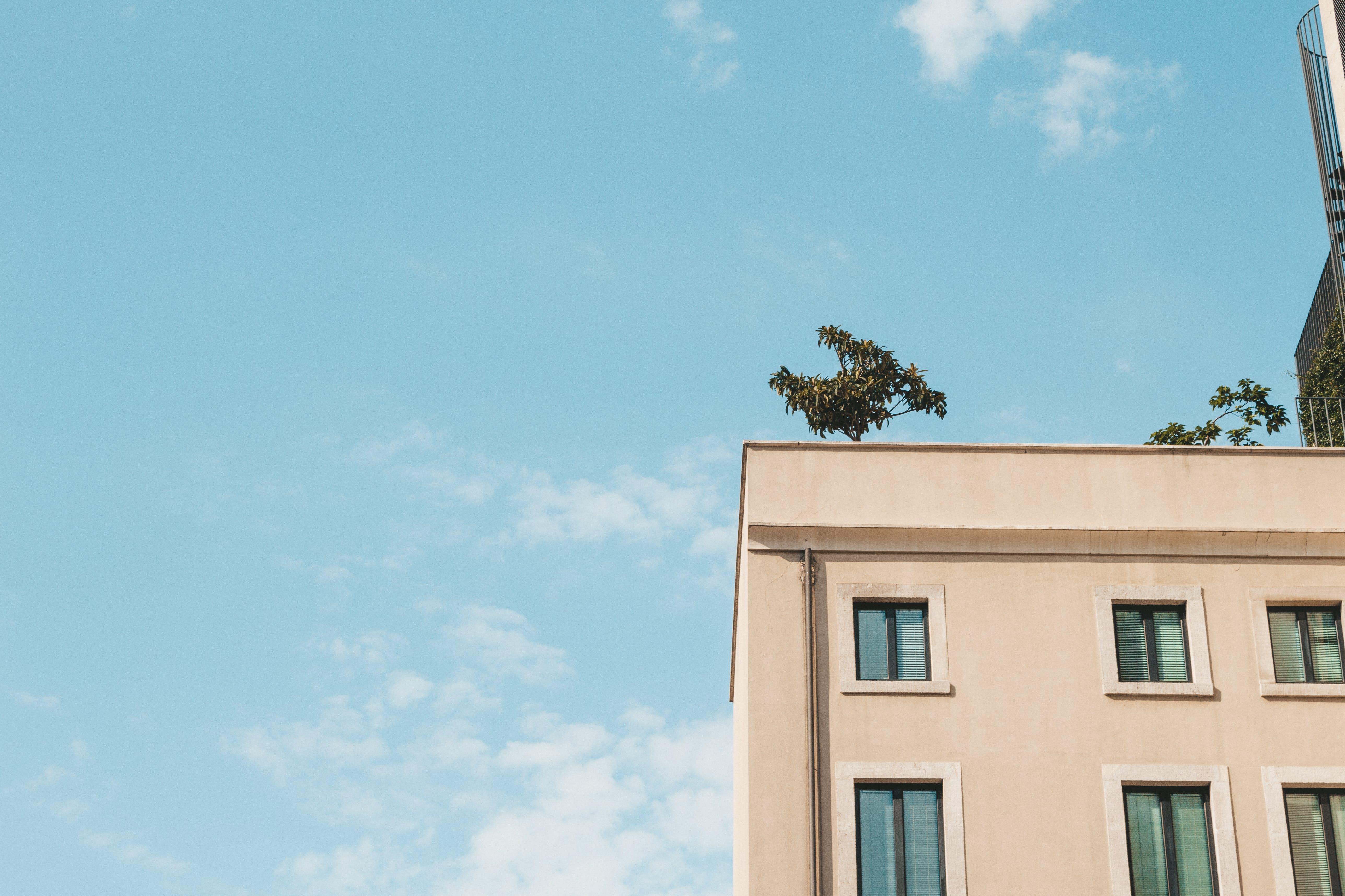 apartament, arbre, arquitectura