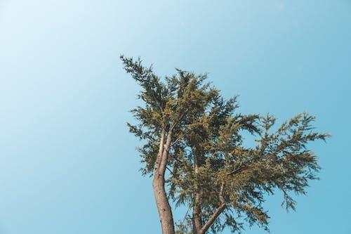 Green-leafed Tree