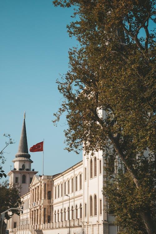 Fotos de stock gratuitas de administración, antiguo, árbol, arquitectura
