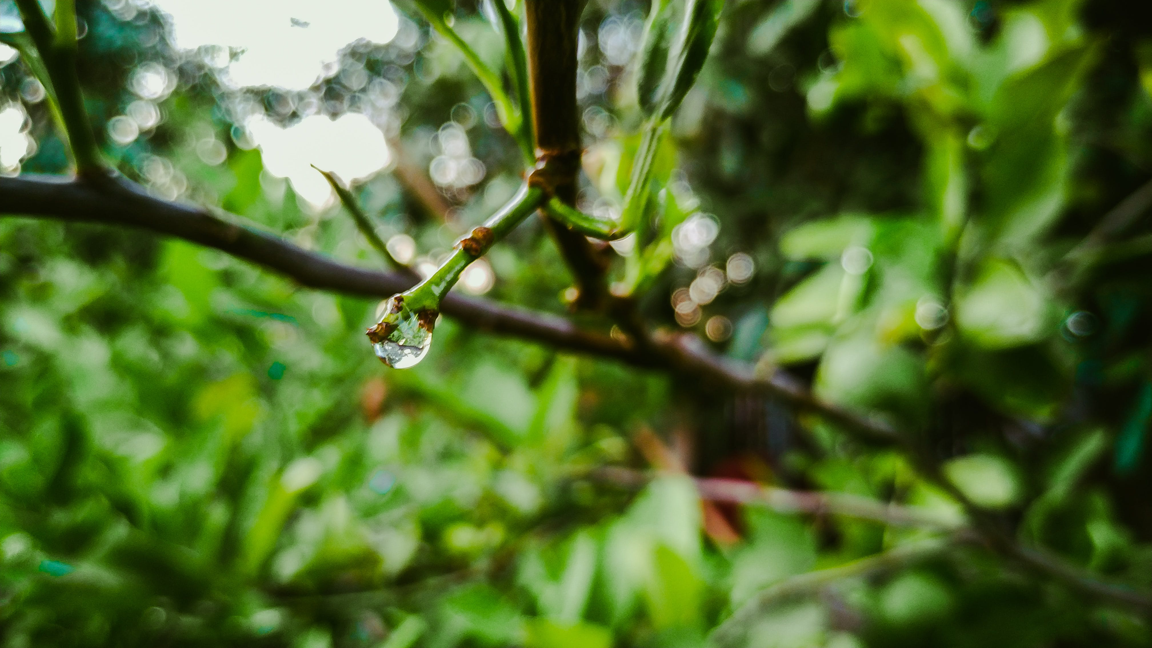 Free stock photo of after the rain, drop