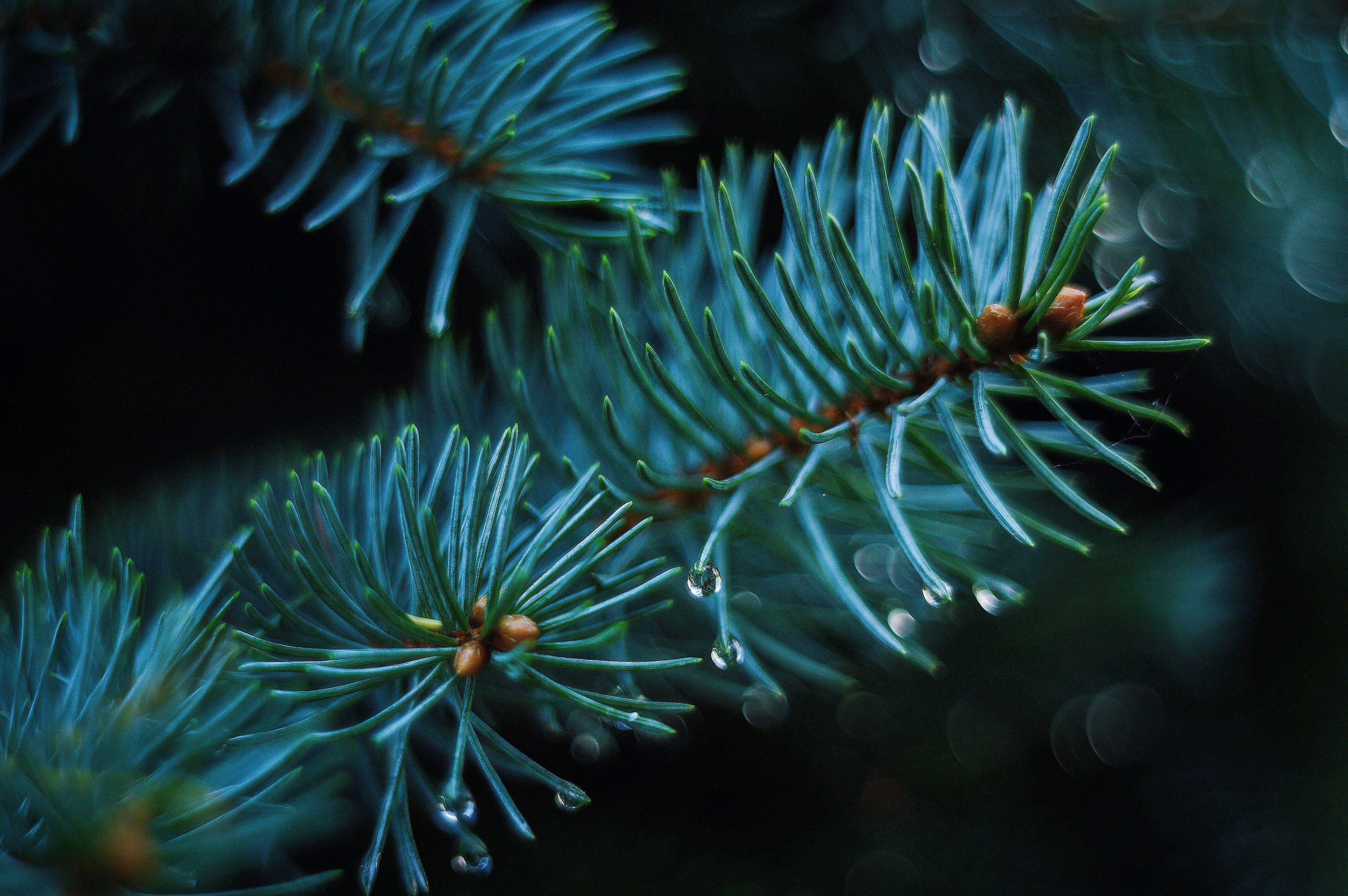 biology, blur, branches