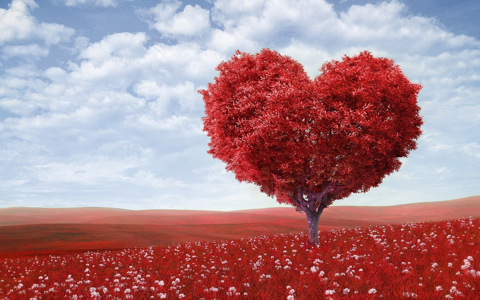 heart red leafed tree on red field � free stock photoPhoto #1