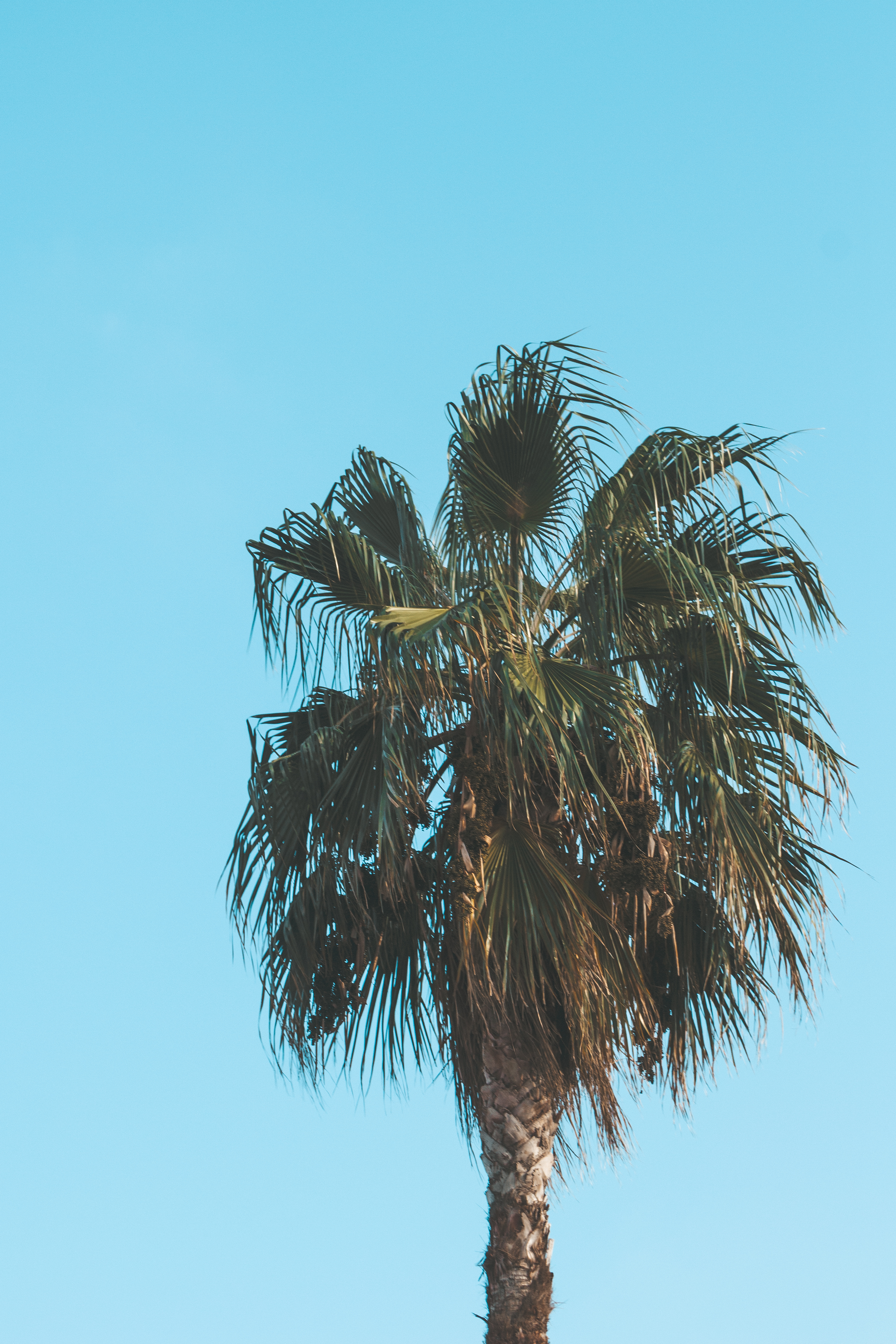 Photo Of Green Palm Tree