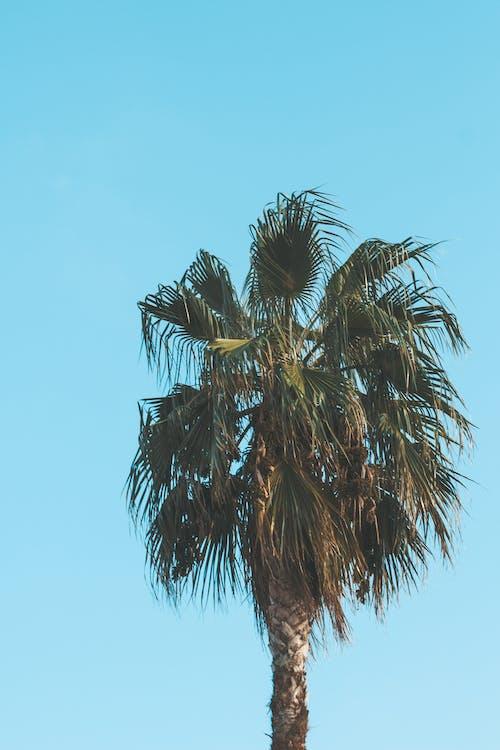 árbol, coco, fondo de pantalla de samsung