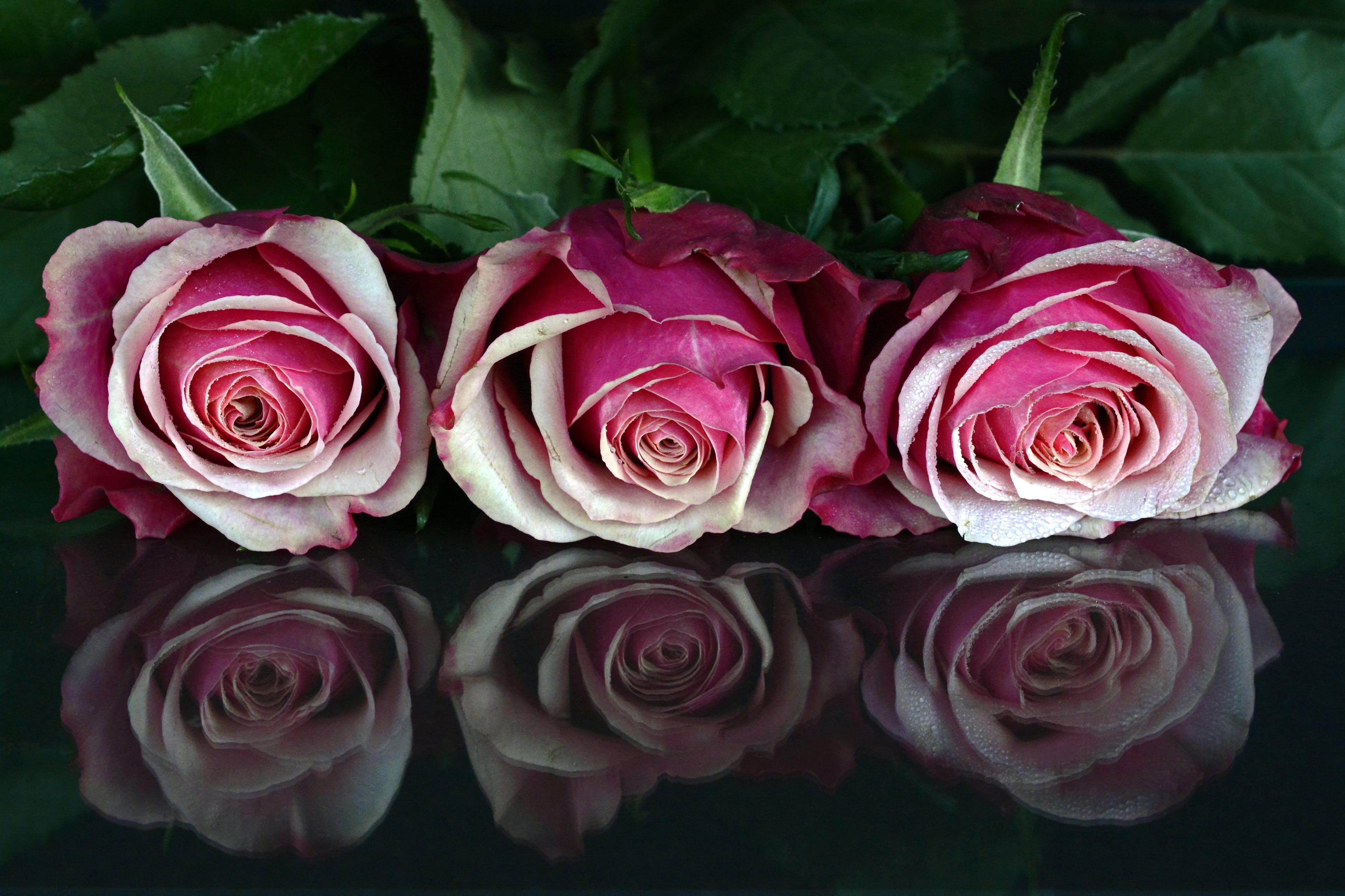 Foto profissional grátis de broto, close, floração, flores