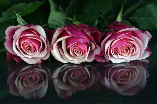 Kostnadsfri bild av blomma, blommor, blomning, kronblad