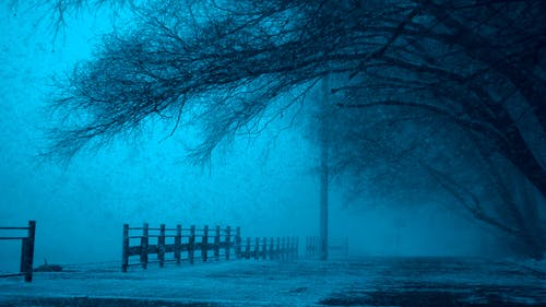 Ingyenes stockfotó befagyott, fák, félelem, festői témában