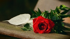 red, romantic, gift