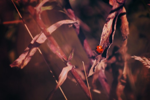 Free stock photo of leaves, insect, ladybird, ladybug