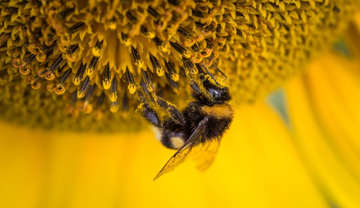 Shallow Focus Photography of Honeybee