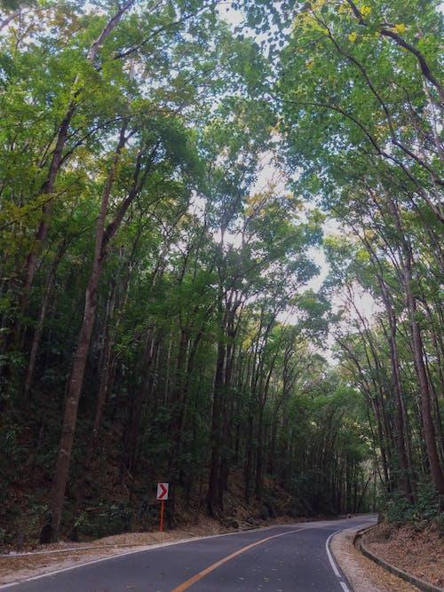 기름진, 도로, 보홀, 숲의 무료 스톡 사진