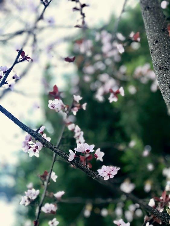 ağaç, güzel çiçekler, mavi