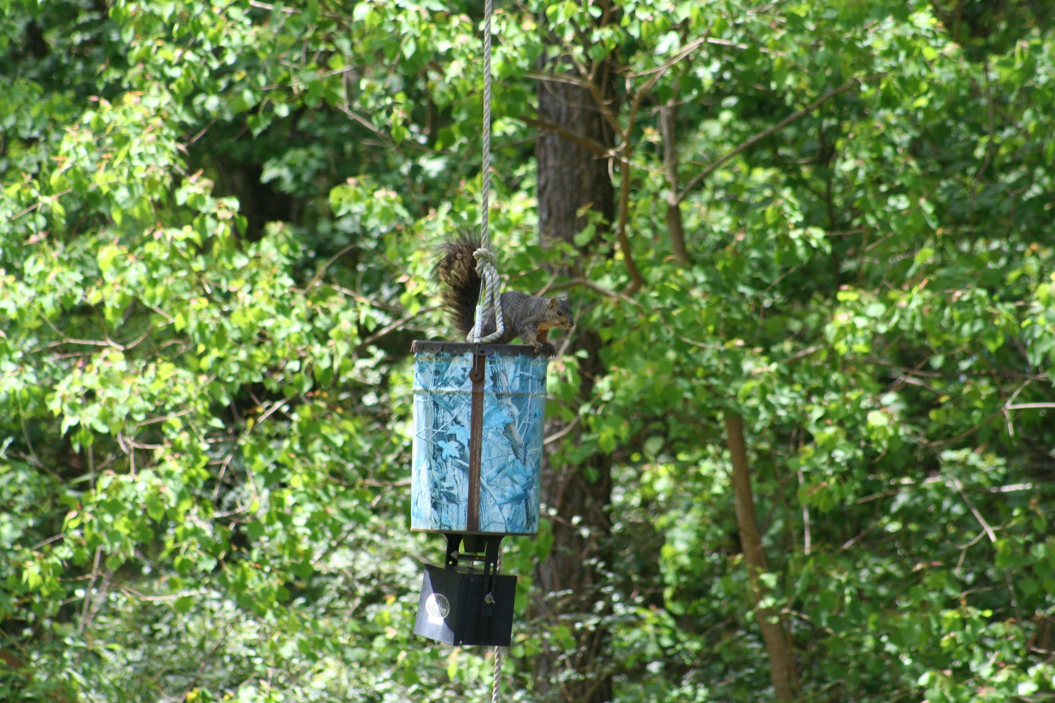 Gratis lagerfoto af egern, hjorte feeder, louisiana, natur