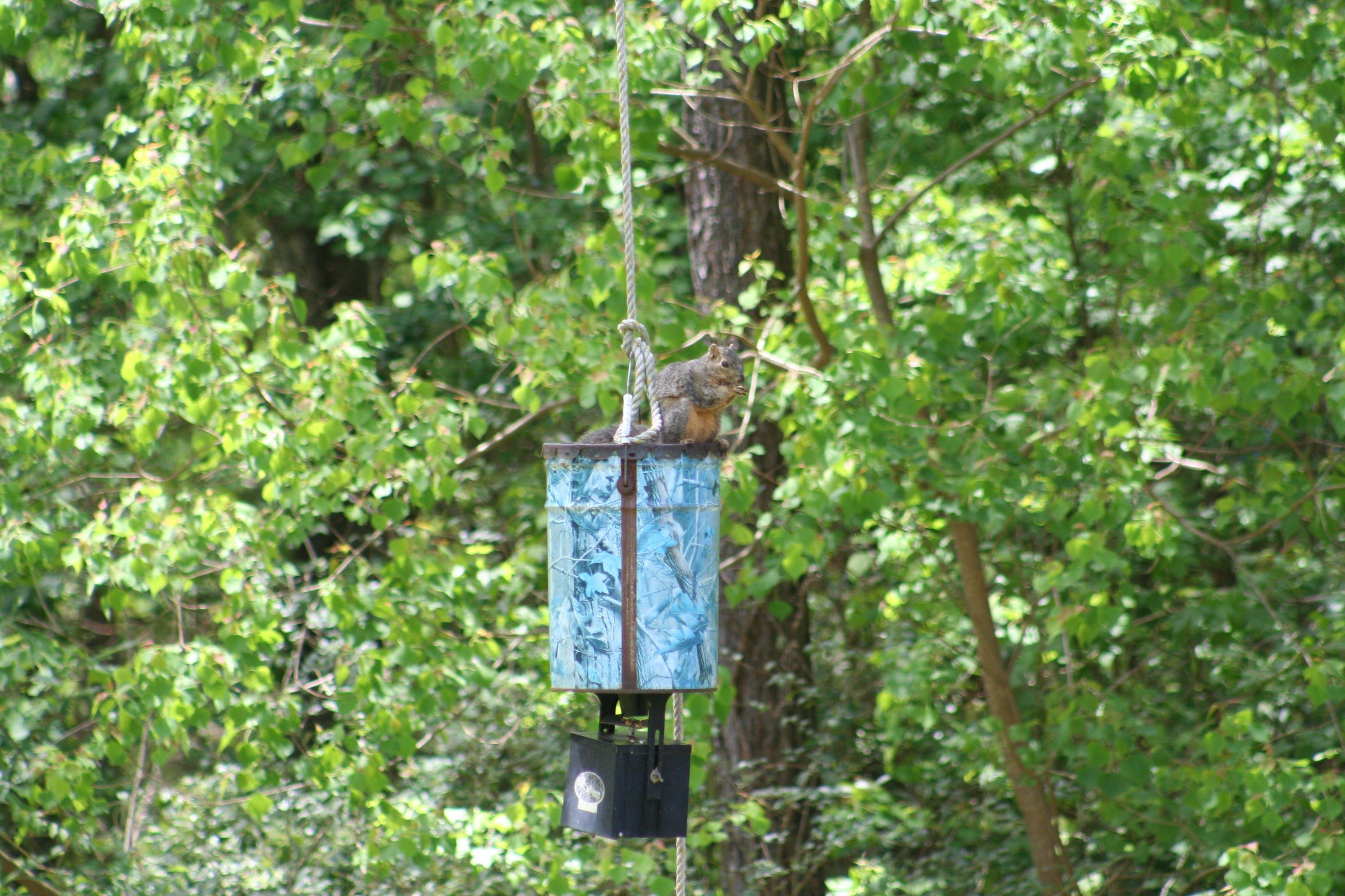 Gratis lagerfoto af egern, hjorte feeder, natur, træer