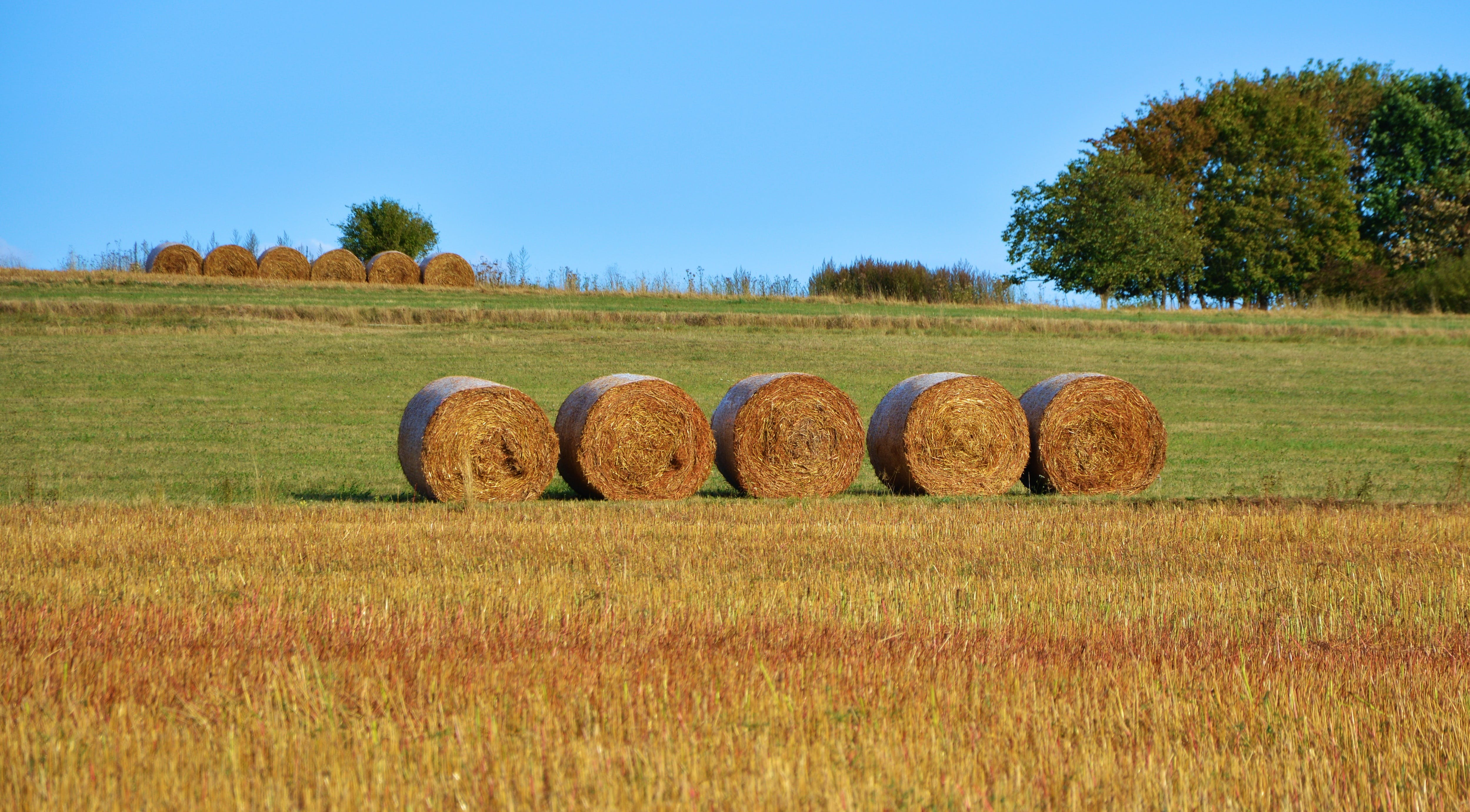 Five Rolled Hays on Farm Field