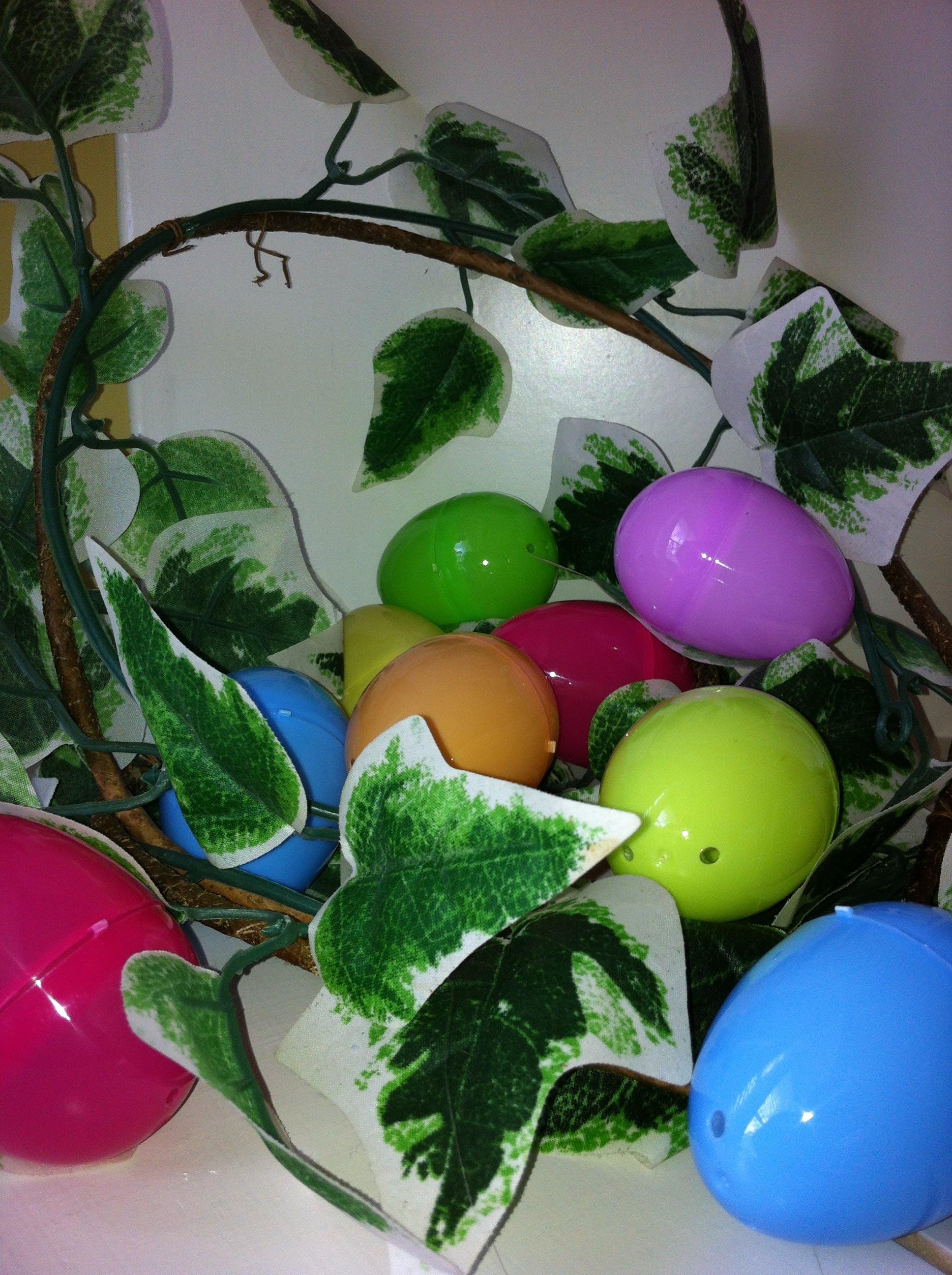 Gratis lagerfoto af efeu, farverig, påske, påskeæg