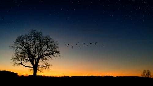 Silhouette Photography of Trees and Birds