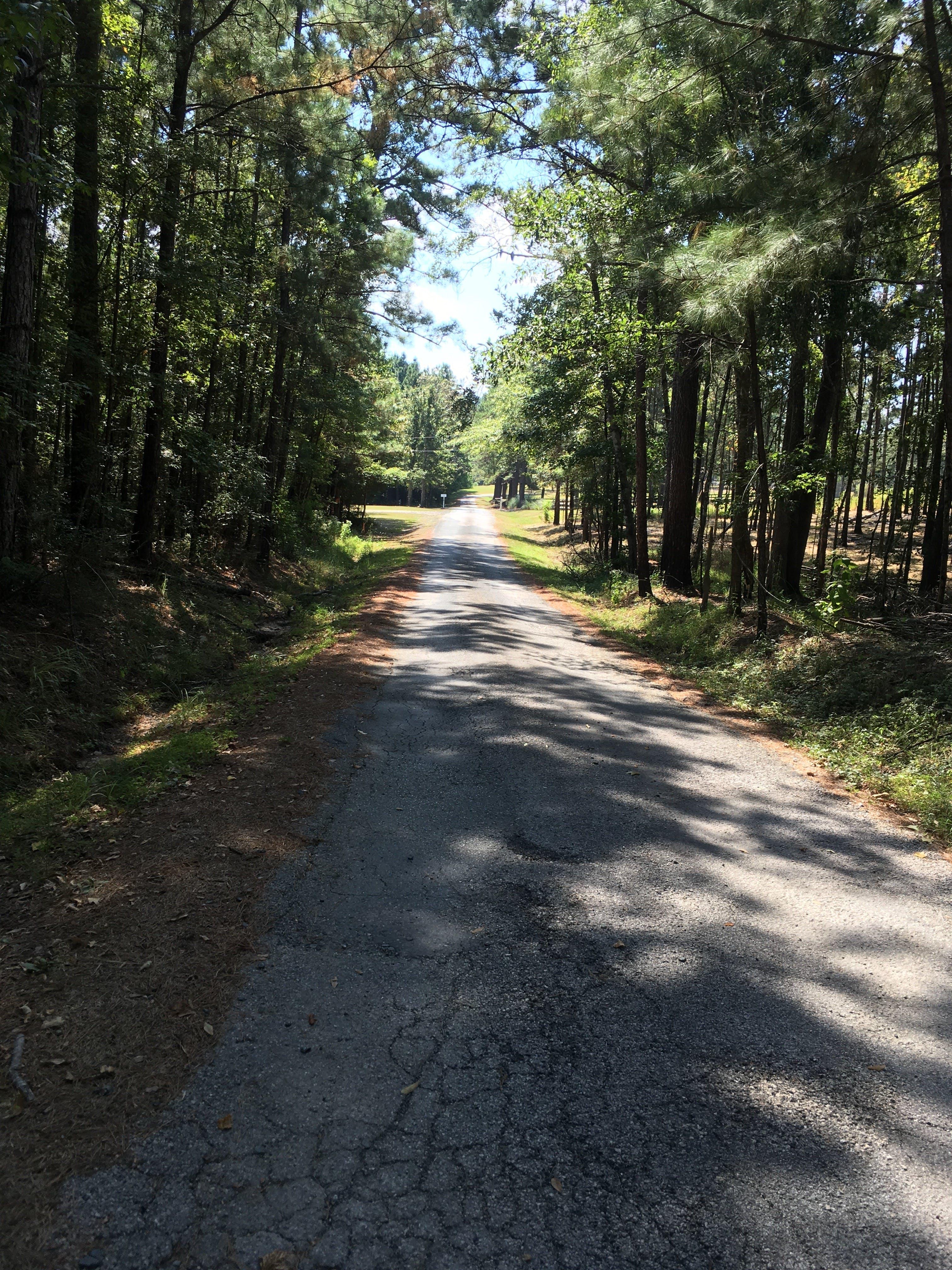 Gratis lagerfoto af land, skygger, træer, vej