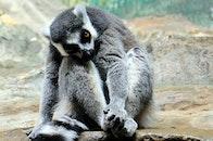 animal, cute, grey