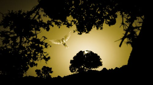 Free stock photo of evening sun, freeze, white bird