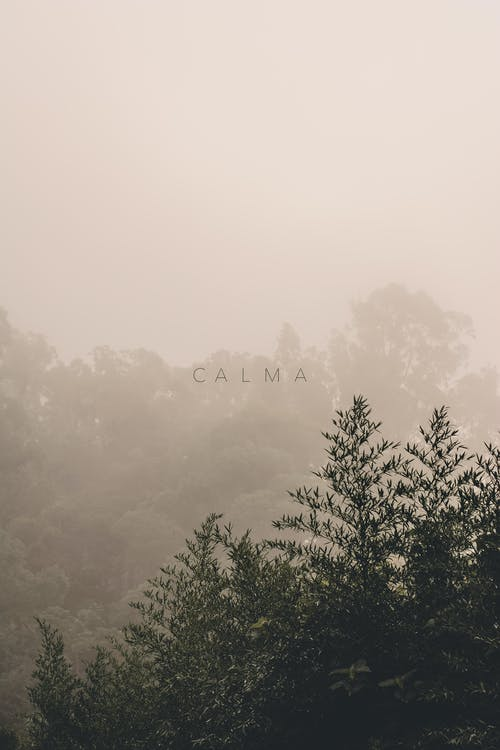 Free stock photo of calm