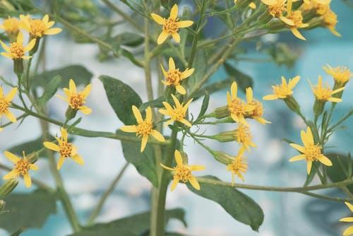 꽃, 봄 꽃의 무료 스톡 사진