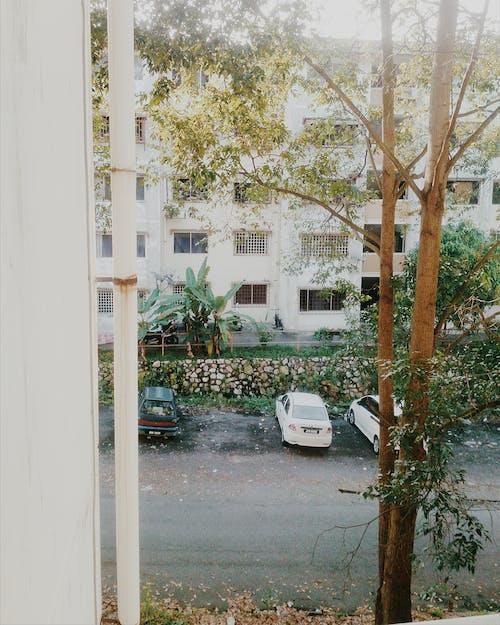 Photos gratuites de arbres, architecture, architecture moderne, articles en verre