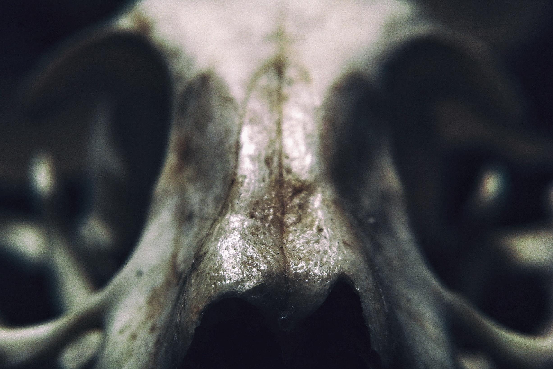 Free Stock Photo Of Abstract Anatomy Art